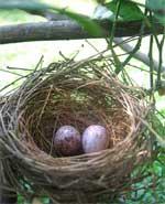 Petit à petit, l'oiseau fait son nid