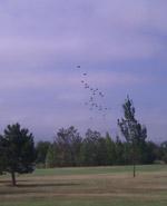 Des parachutes sur le golf : est-ce un signe ?